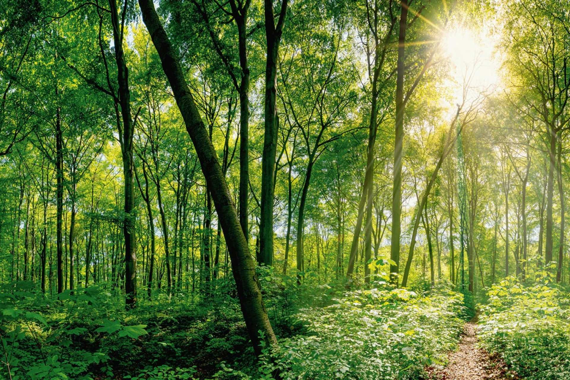 Website_Nachhaltigkeit_Nachhaltigkeitskonzept_1200x800px